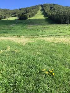 Jackson Hole Secrets Locals Info tip: